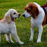 cani-incontrano-parco-interagiscono-guinzaglio