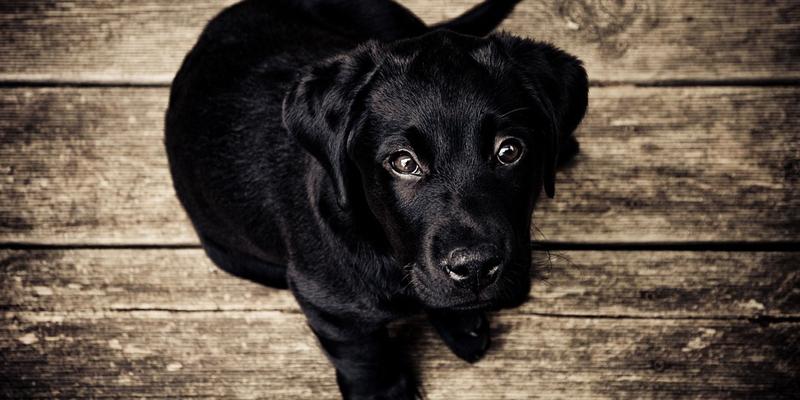 Perché il cane trema? Tutte le cause cover