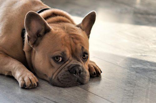 Primo soccorso nel cane: cosa fare se Fido non sta bene? thumb