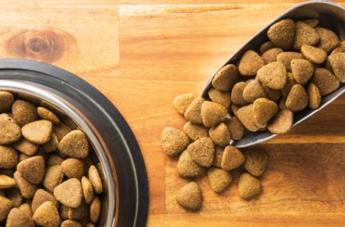 Quali sono le migliori crocchette per cani italiane? thumb