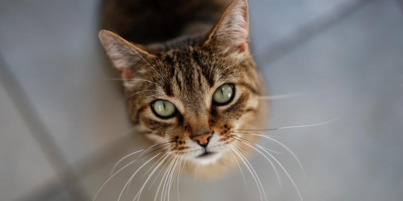 gatto che urina frequentemente piccole quantità
