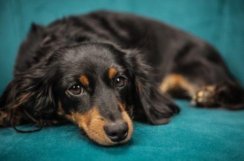 Mal di pancia del cane: 8 segnali di malessere thumb