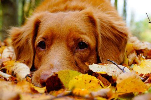 Cani e gatti: come affrontare l'autunno e l'arrivo del freddo thumb