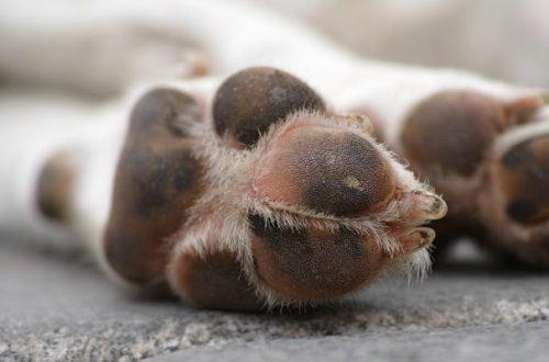 I cuscinetti plantari del cane: come prendersena cura thumb