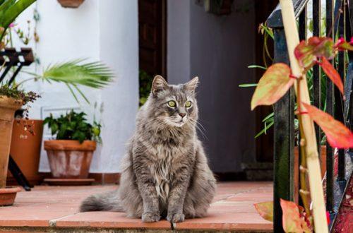 Gatti e piante: come evitare che Micio distrugga i vasi e giochi con la terra thumb