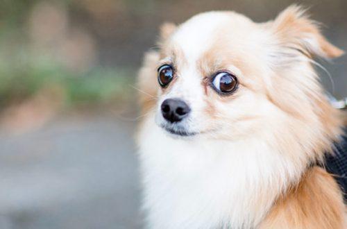 Fuga, aggressione, immobilità: come reagisce il cane alla paura thumb