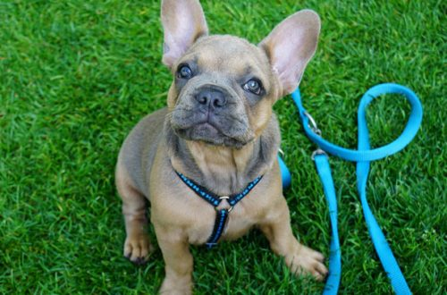 Cucciolo e guinzaglio: come insegnargli a non tirare durante la passeggiata thumb