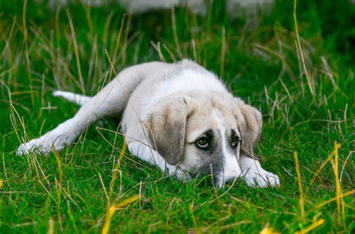 Isolamento sociale del cane: come evitarlo thumb