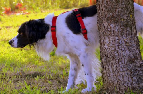 Disabituanti per cani e gatti: quando utilizzarli? thumb