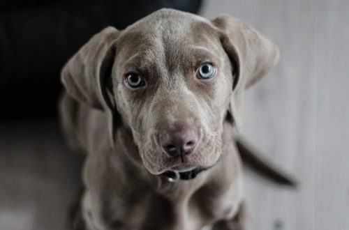 La prima volta di un cucciolo di cane in casa: 7 cose da sapere thumb