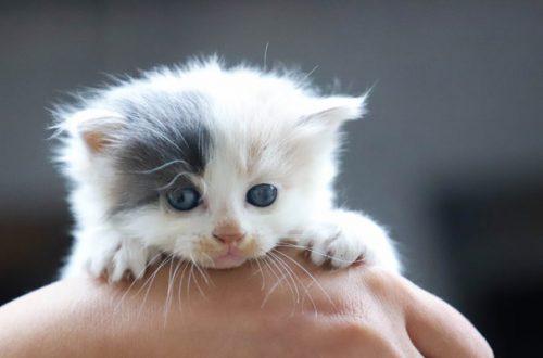 Adottare un cucciolo di gatto: 7 cose da non dimenticare thumb