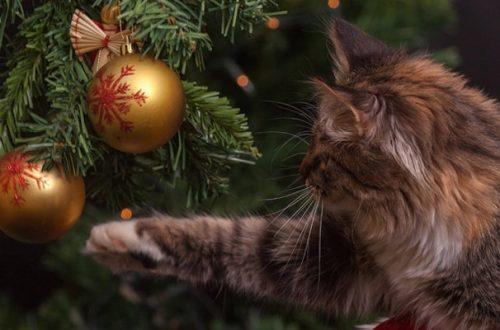 5 consigli per far convivere il gatto e l'albero di Natale thumb