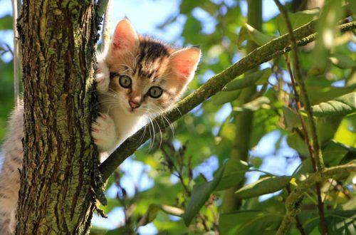 Lo studio: «Il gatto mette a rischio la biodiversità, va tenuto in casa» thumb