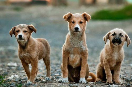 Sterilizzare il cane: i lati positivi e quelli negativi thumb