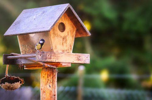 Cosa dare da mangiare agli uccelli in inverno? Ecco 5 consigli thumb