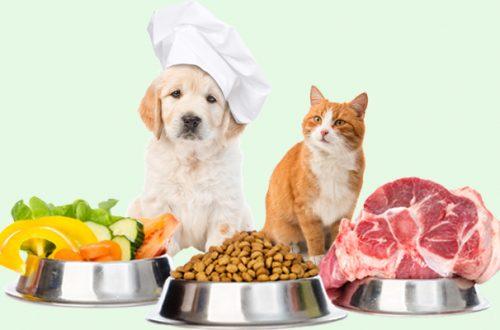 Sai davvero cosa mangiano il tuo cane e il tuo gatto? thumb