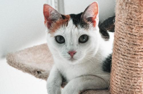 Calzari antigraffio per gatti: Amazon li ha cancellati dal proprio sito thumb