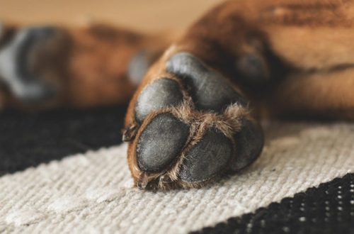 Coronavirus: disinfettare il pelo del cane con alcool è rischioso per la sua salute thumb