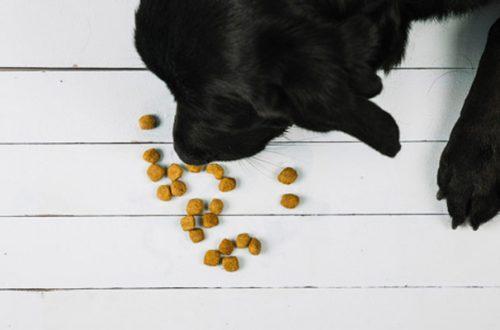 Appetizzanti chimici nei mangimi: quando vengono utilizzati e perché thumb