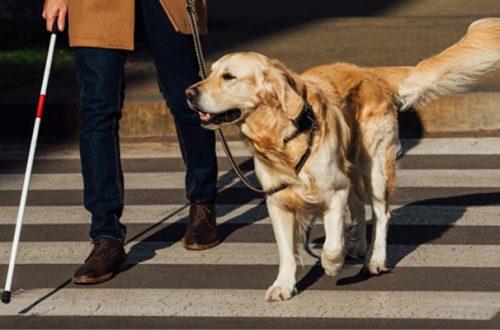 Cane guida: insostituibile amico a quattro zampe thumb