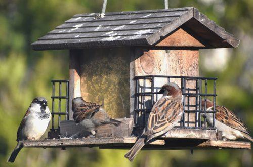 Birdgarden, come rendere il balcone o il terrazzo ospitale per gli uccellini thumb