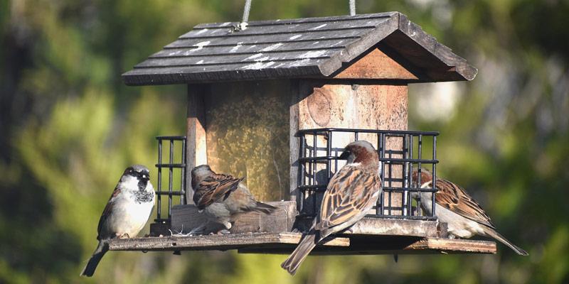 Birdgarden, come rendere il balcone o il terrazzo ospitale per gli uccellini cover