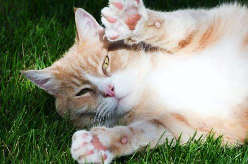 Candeggina contro il Coronavirus, i pericoli per i nostri animali thumb