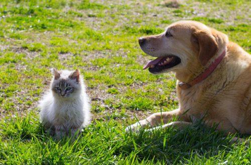 Fase 2 anche per cani e gatti: ecco come proteggerli dai malanni di stagione thumb