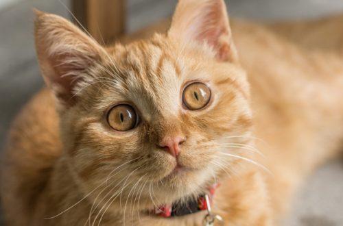 7 segnali per capire se il gatto è felice thumb