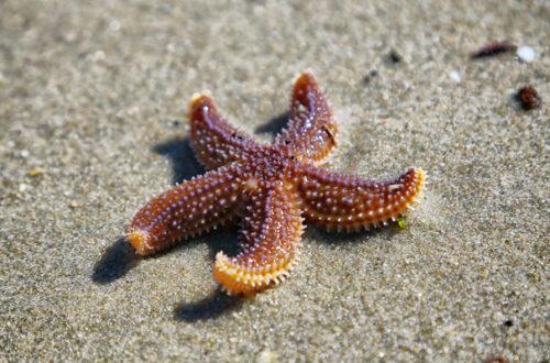 Dai trigoni alle meduse: per gli animali marittimi è stata un'estate difficile thumb