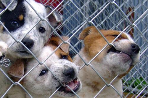 Strage di cuccioli in un deposito logistico cinese thumb