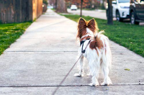 Passeggiata col cane? In Germania è obbligatoria per legge thumb