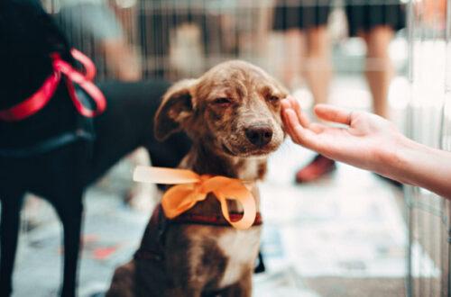 Perché adottare un animale domestico è una buona scelta? thumb