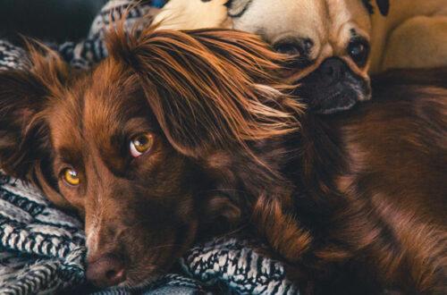 Il Coronavirus mette in crisi le famiglie: le conseguenze sugli animali domestici thumb