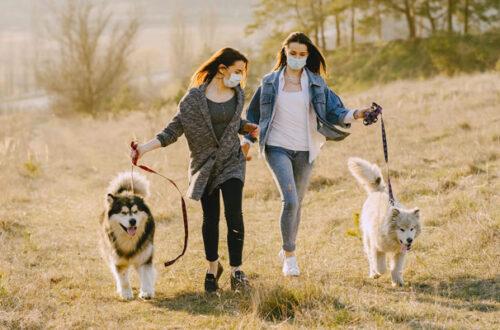 Si può portare il cane a passeggio se si è in zona rossa? thumb