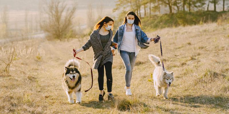 Si può portare il cane a passeggio se si è in zona rossa? cover