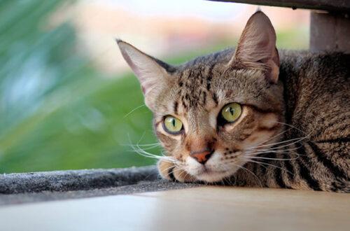 Il gatto è stressato? Ecco come capirlo e rimediare thumb