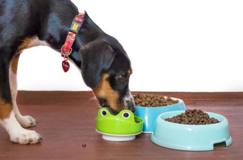 Mangime di pesce per cani di qualità: quale scegliere? thumb