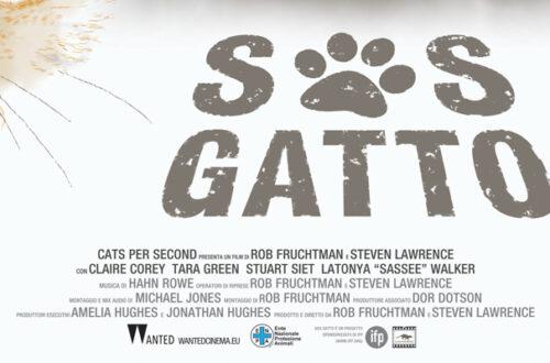 S.O.S. GATTO: il film che racconta la vita di chi si prende cura dei gatti senza famiglia thumb