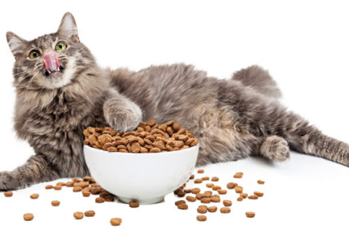 Crocchette per gatti al pesce, come scegliere le migliori? thumb