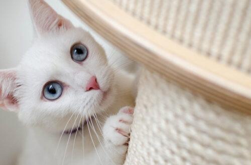 Tiragraffi: come scegliere il migliore per il proprio gatto thumb