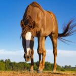 prendersi cura del cavallo