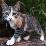 gatto marca