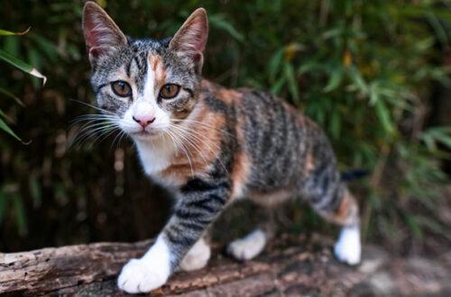 Perché il gatto marca il territorio? E come lo fa? thumb