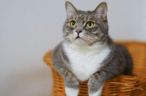 Crocchette per gatti sterilizzati: come sceglierle? thumb