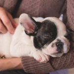 crocchette per cani puppy