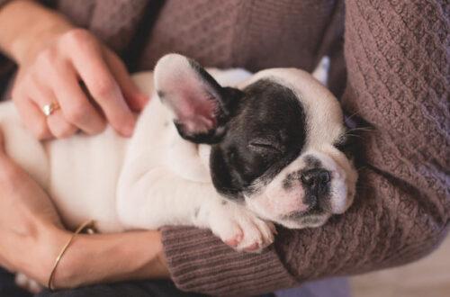 5 consigli per scegliere le migliori crocchette per cani puppy thumb