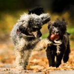 castagne ai cani