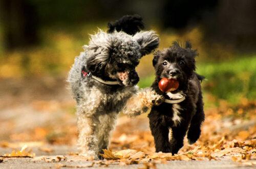 I cani possono mangiare le castagne? thumb
