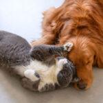 stress cane e gatto